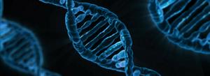 DNA: The New Digital Information Storage System?